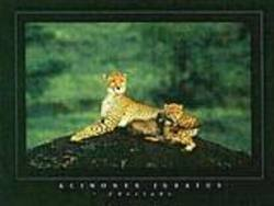 Buy Cheeta Poster in AU New Zealand.